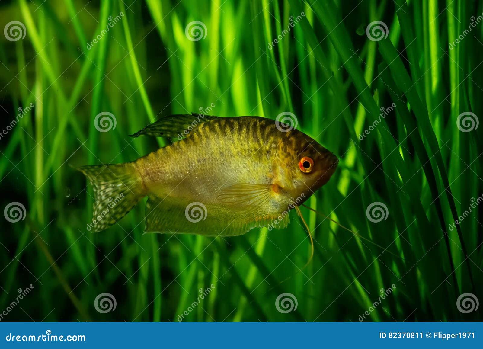 Haustierbedarf Honig Aquarium Fische & Aquarien