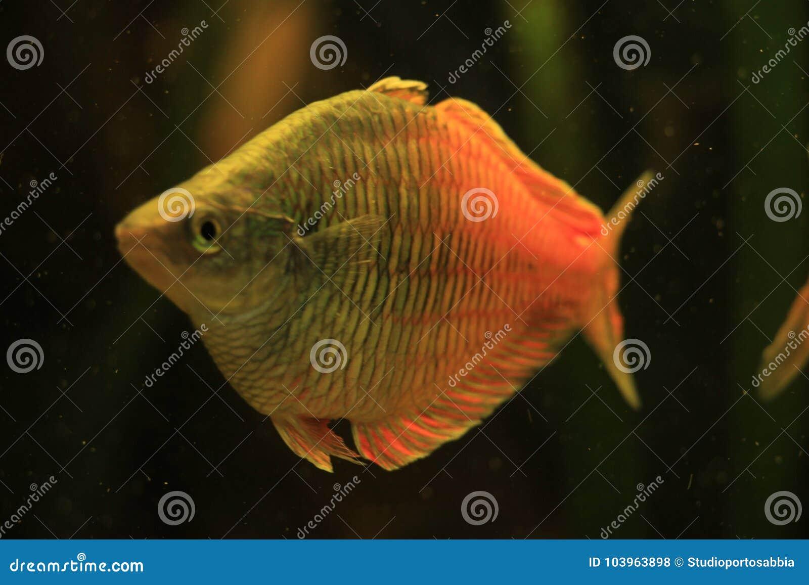 Aquarien Honig Aquarium Haustierbedarf