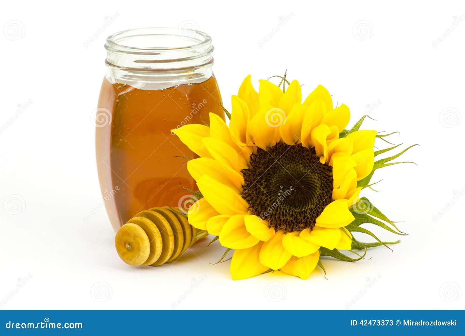 Honig und Sonnenblume