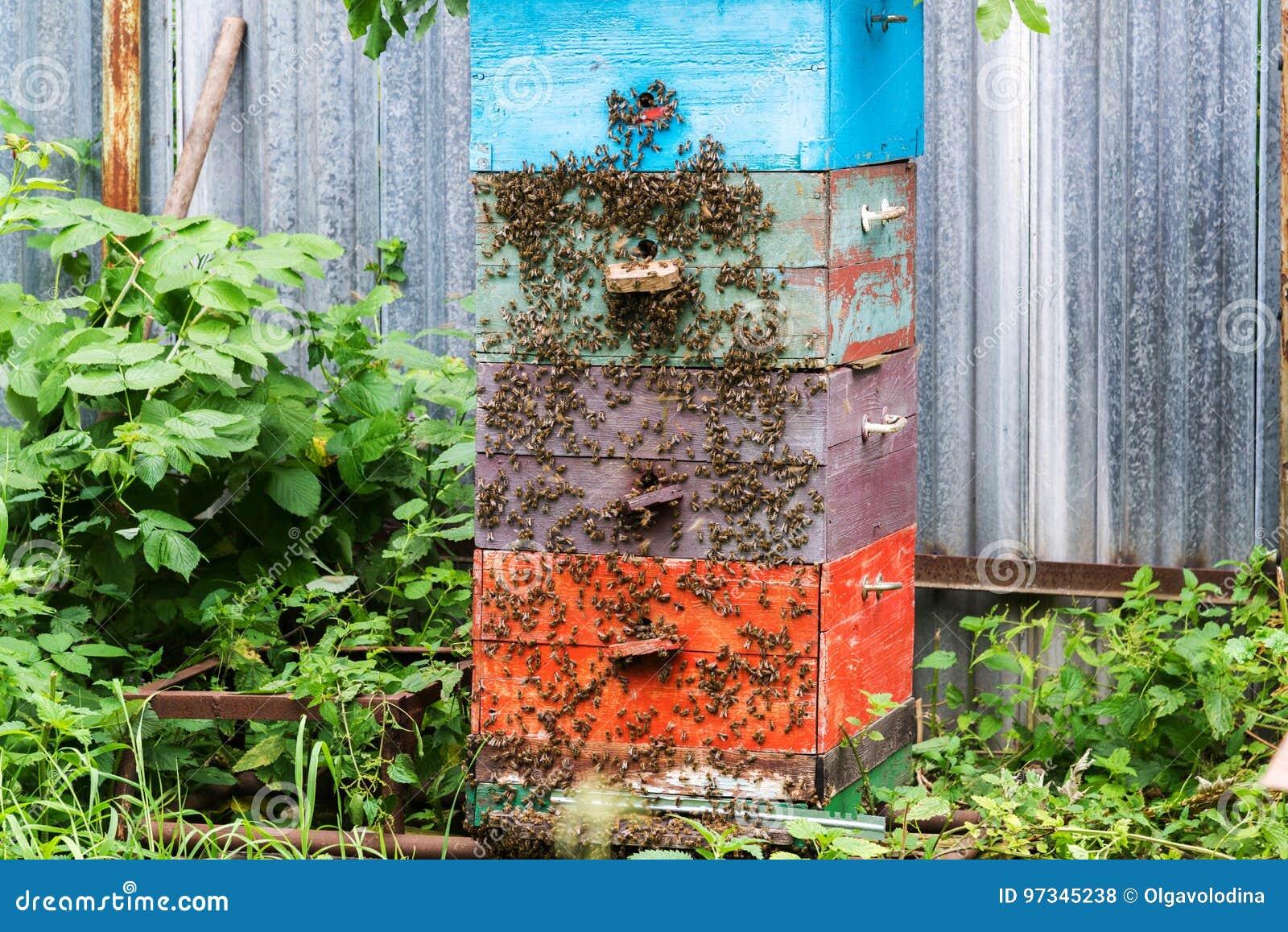 Honigbienen Auf Bienenstock Im Garten Stockfoto Bild Von Biene