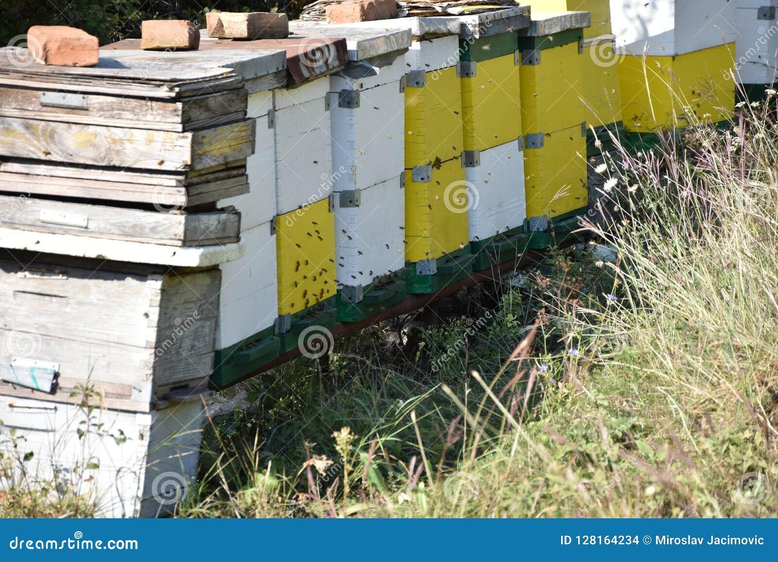 Honingbijen in een bijendoos die worden gehouden
