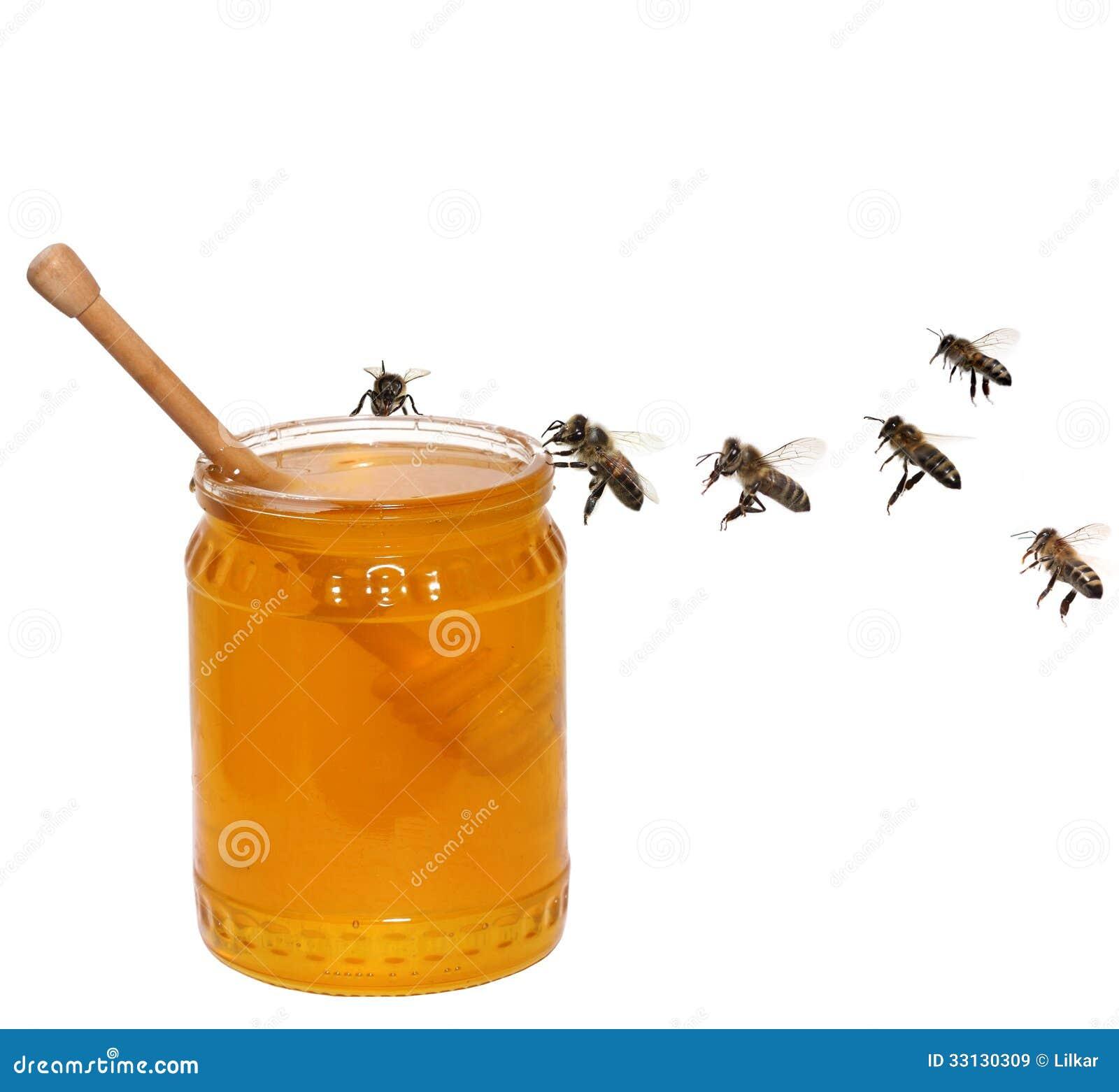 Honingskruik en bijen