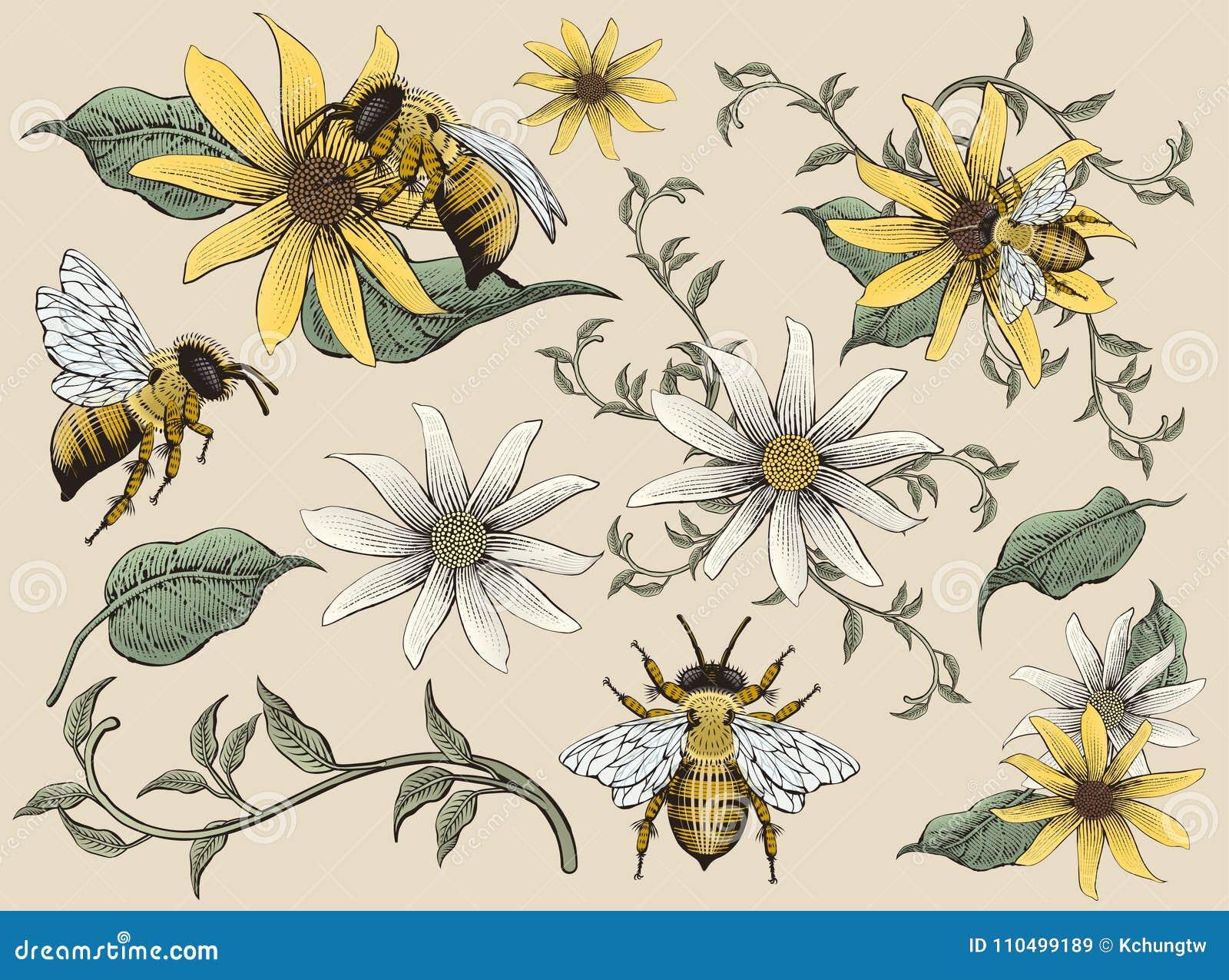 Honungbi- och blommabeståndsdelar