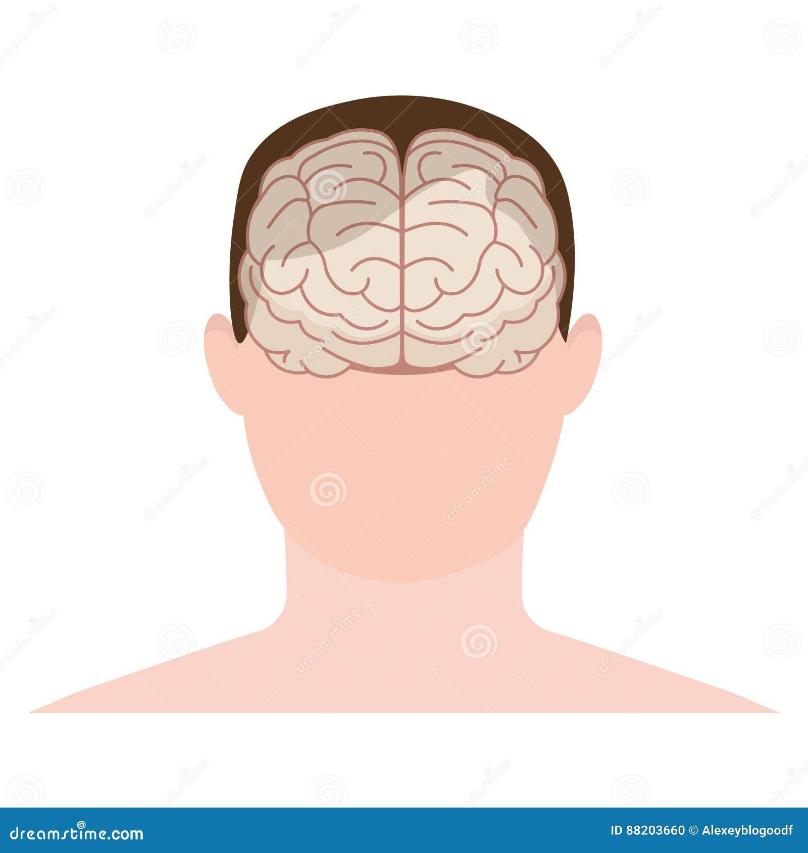 Hoofdmens, gezicht en hersenen in vlakke stijl Vector illustratie F