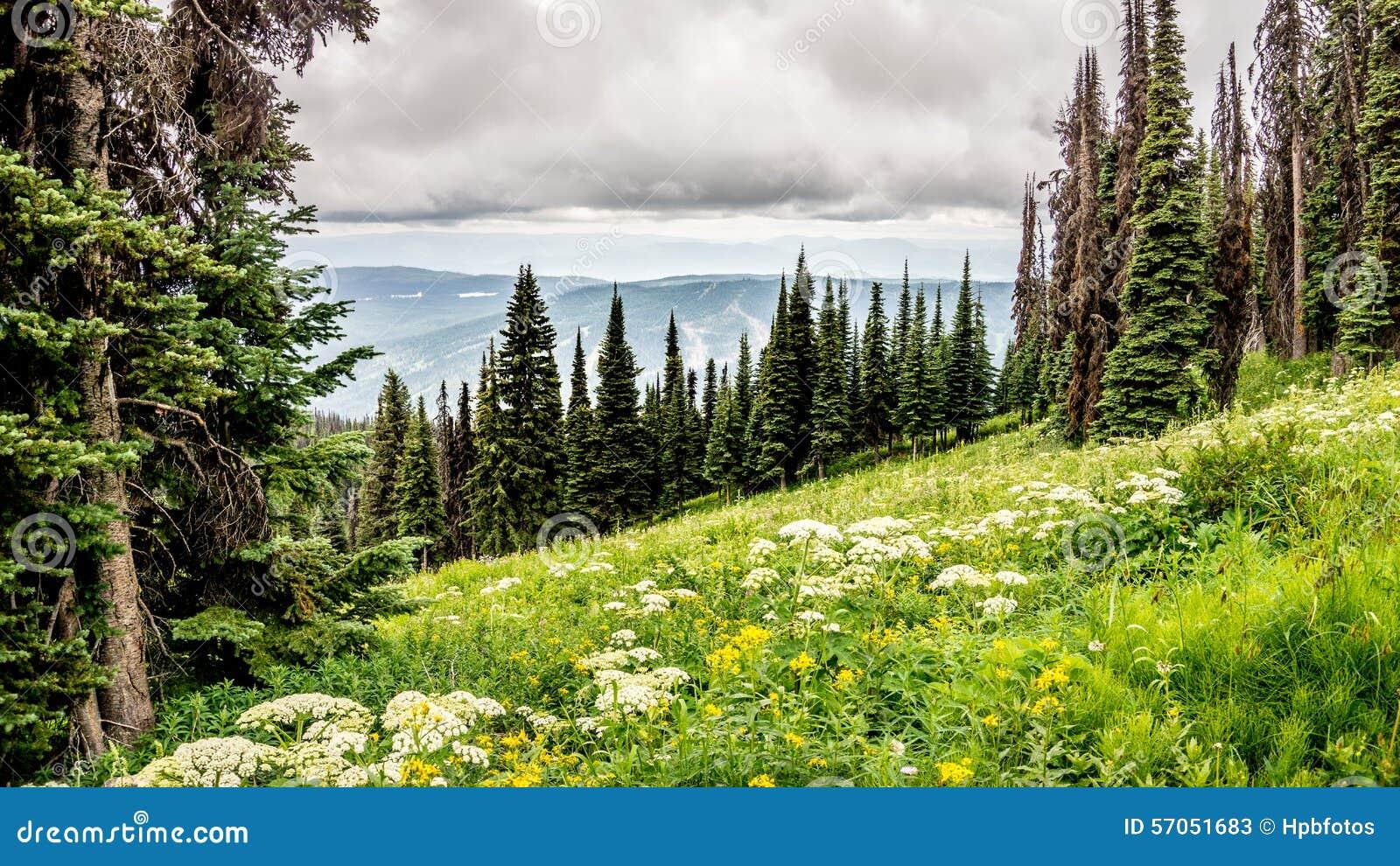 Hoog Alpien Weiden en Valerian Flowers
