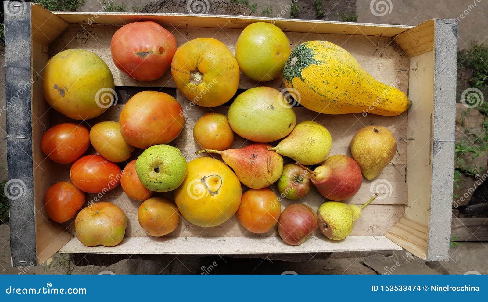 Hoogste mening van houten doos met rijpe organische vruchten en groenten