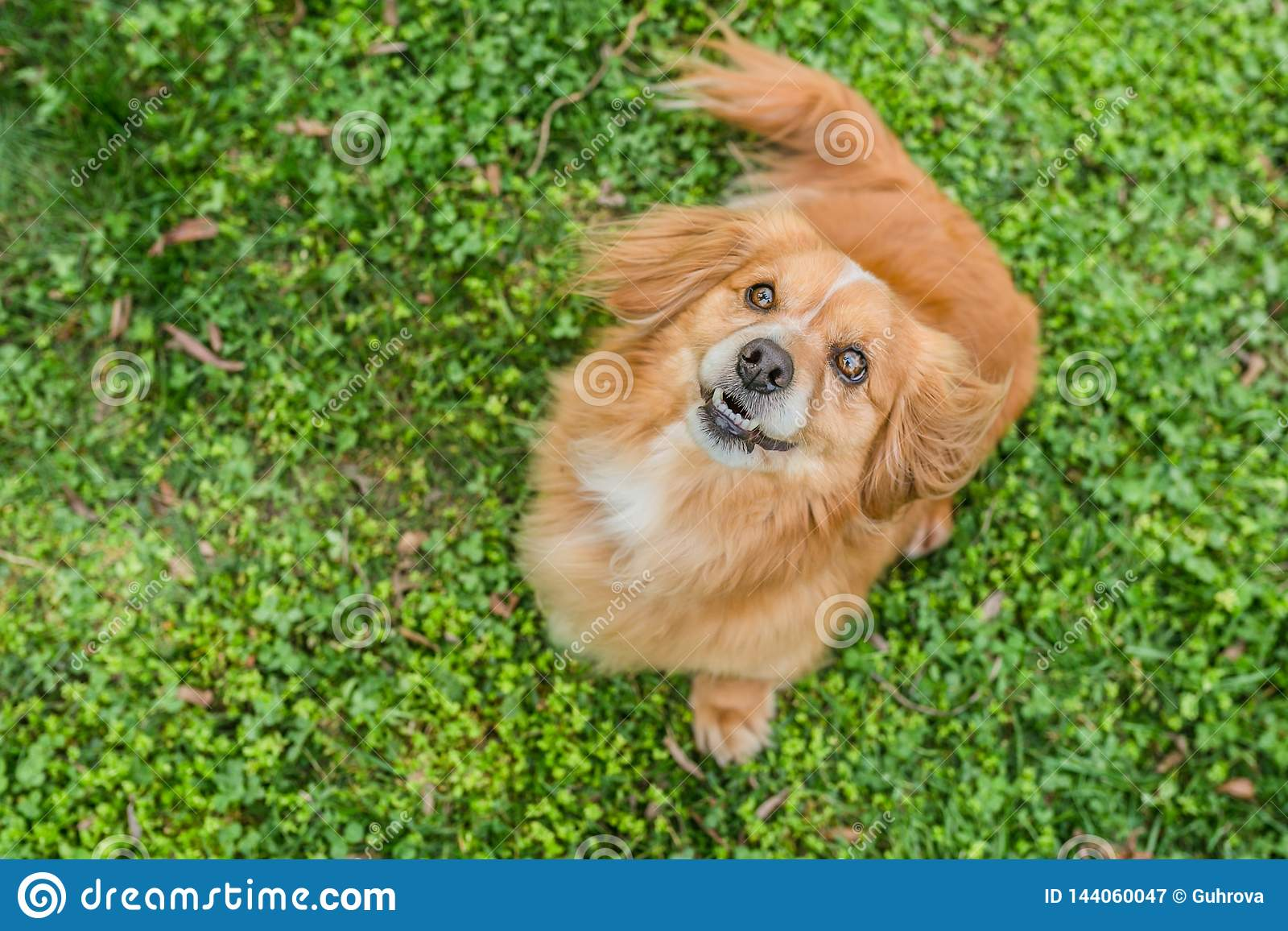Hoogste meningsportret van leuk weinig jonge gemengde rassenhond