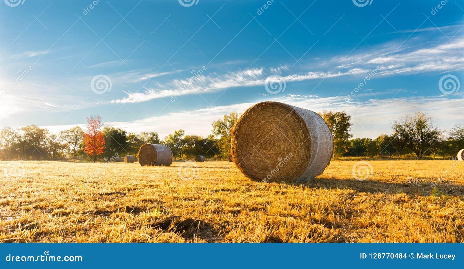 Hooibaal op een landbouwbedrijfgebied