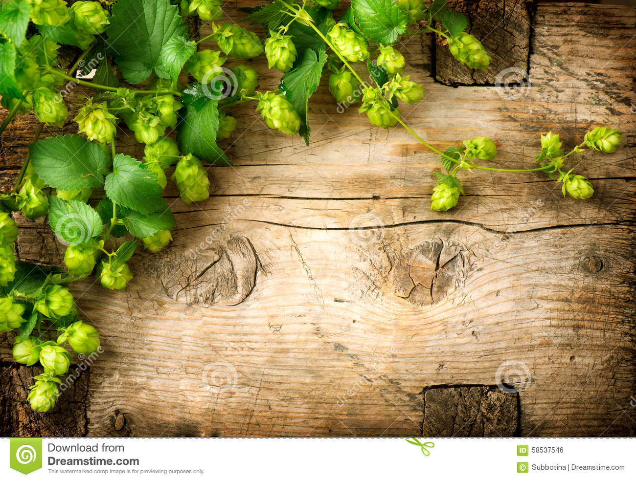 Hop twig over old wooden table background