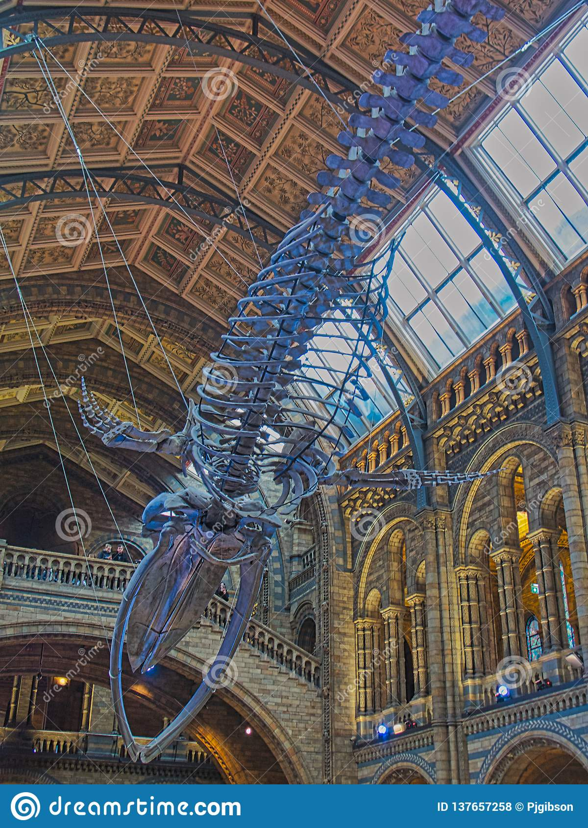Hope -Blue whale skeleton