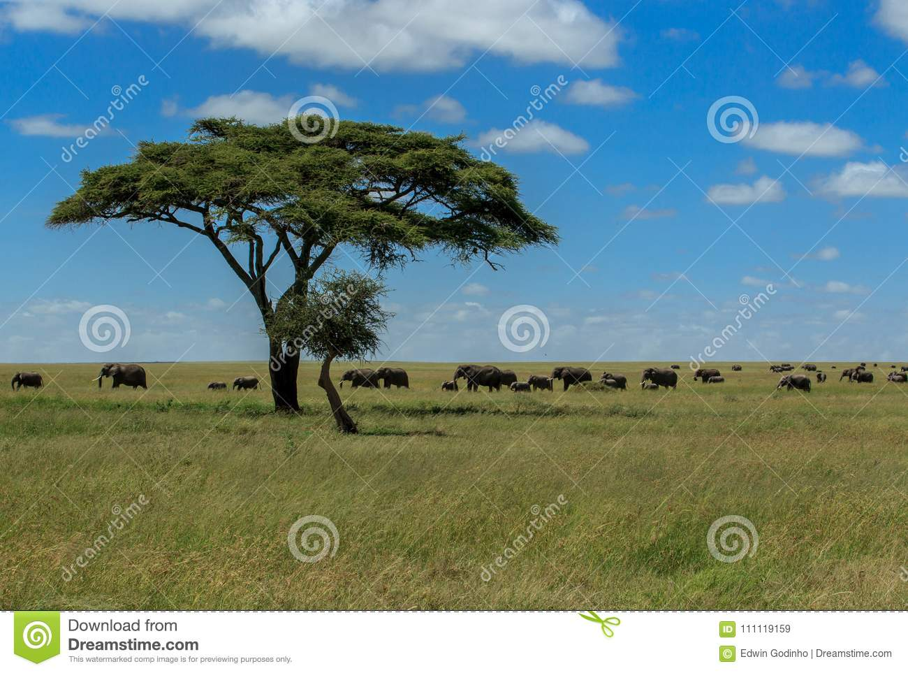 Hope - Herds of African Elephants in the Serengeti National Park