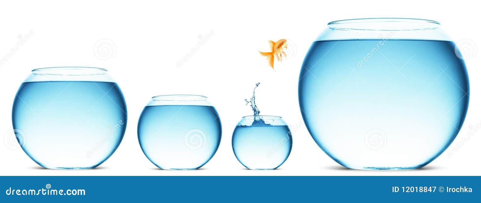 Hoppa guldfisk