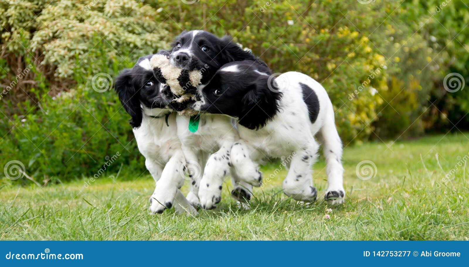 Hora del recreo del perrito, tres hermanas juegan con un juguete quebrado