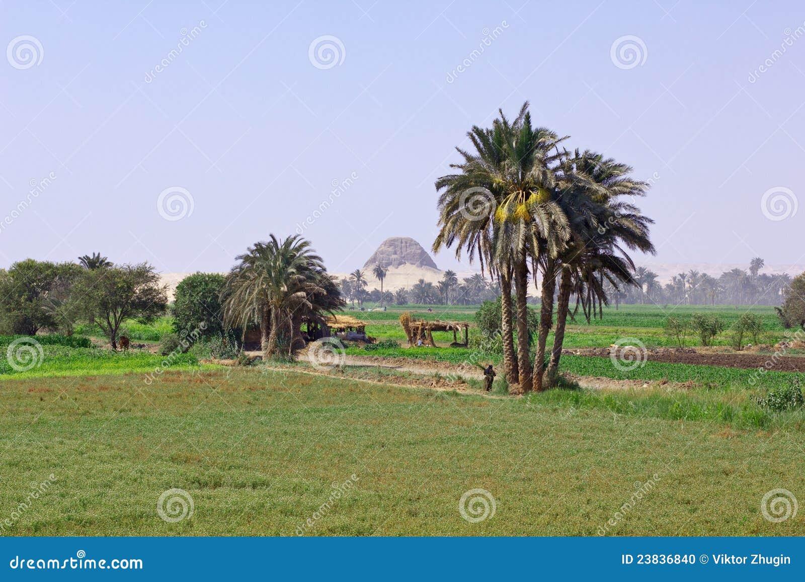 Horizontal égyptien