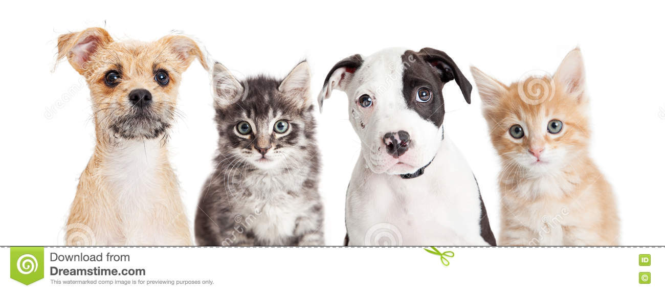 horizontal banner of cute puppies and kittens stock photo image of