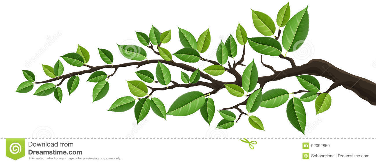 Arbol Con Ramas Animado: Horizontal Banner With Isolated Tree Branch With Green