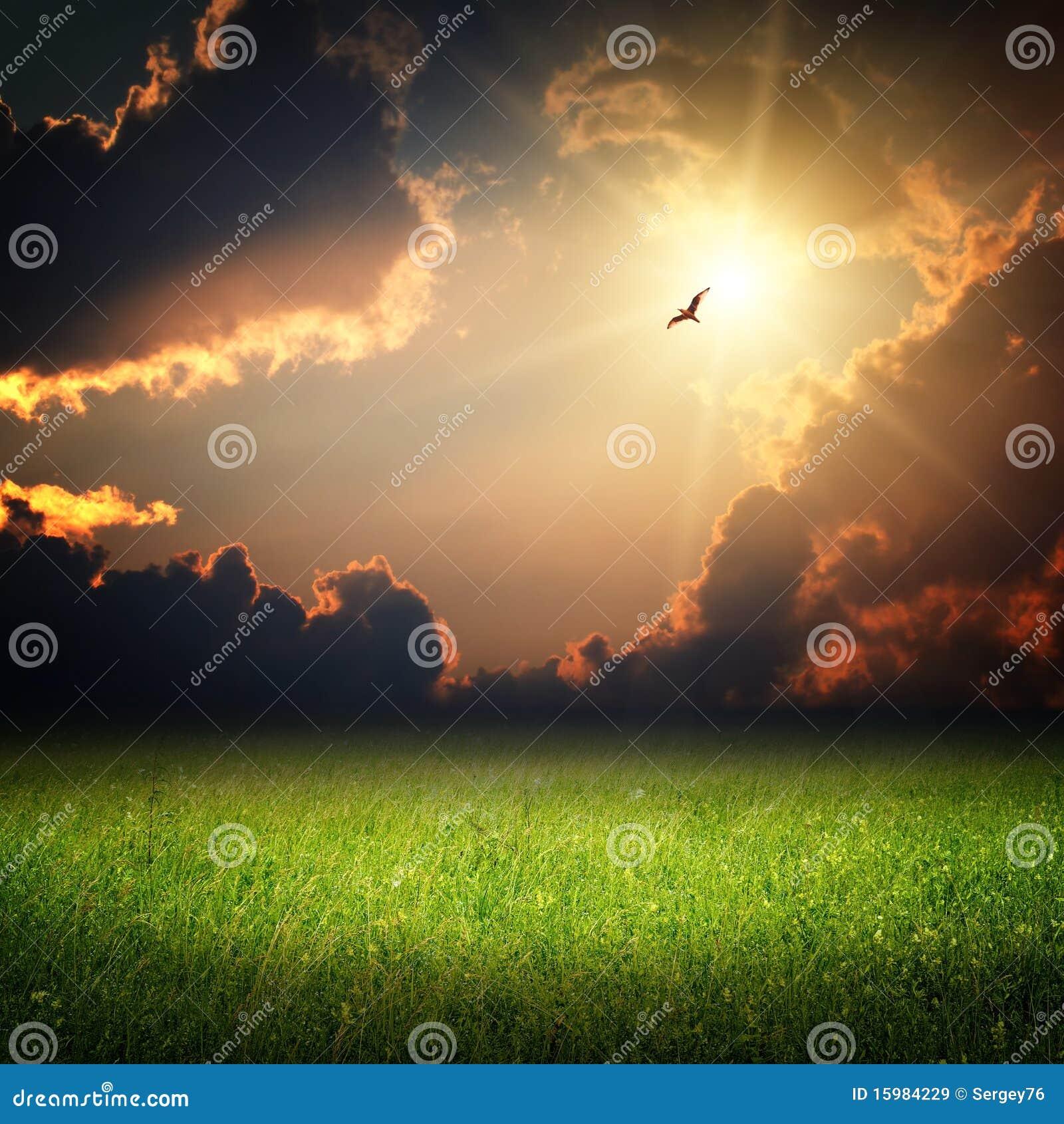Horizontal d imagination. Coucher du soleil magique et oiseau