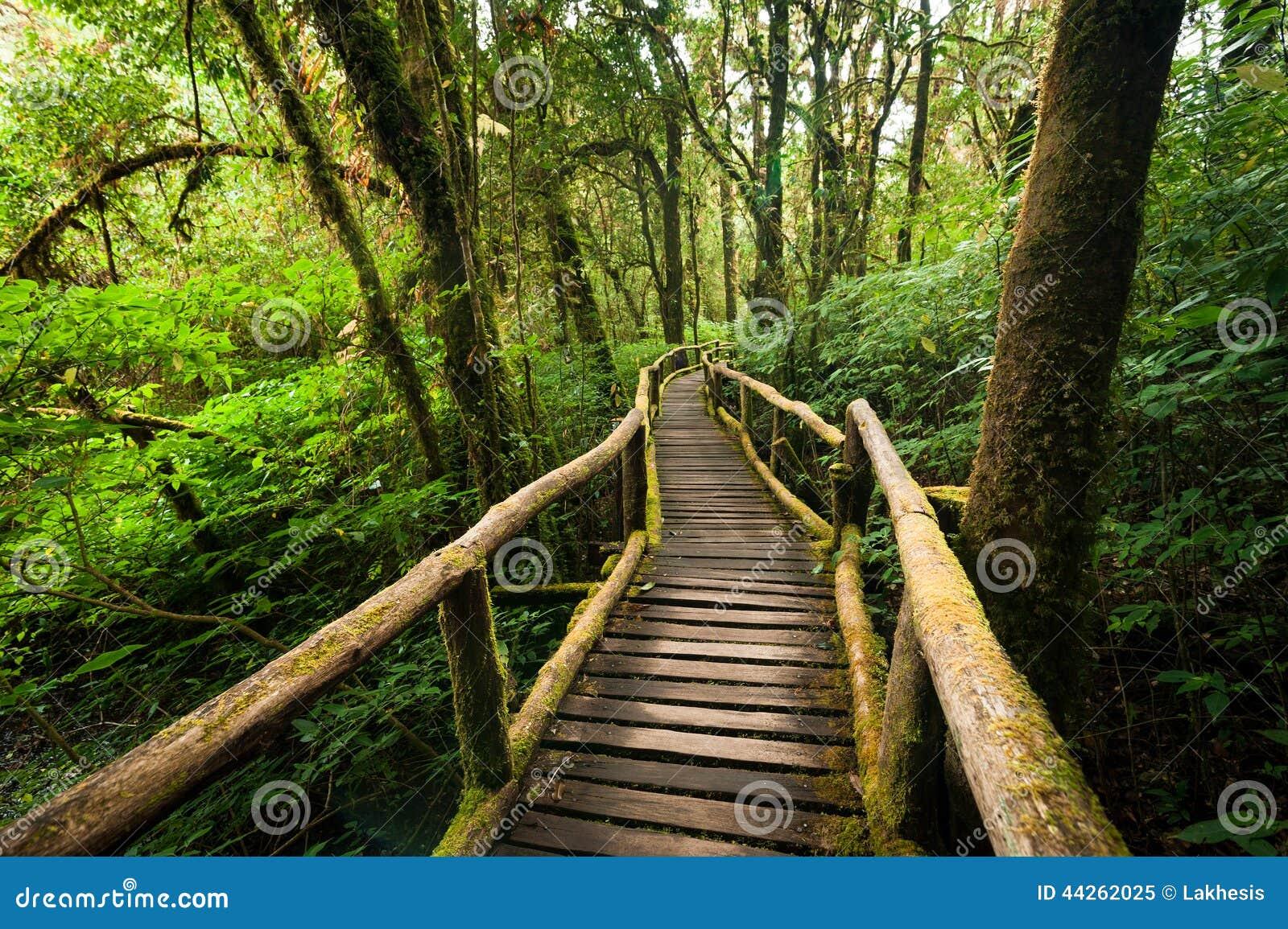 horizontal de jungle pont en bois la for t tropicale tropicale brumeuse photo stock image. Black Bedroom Furniture Sets. Home Design Ideas