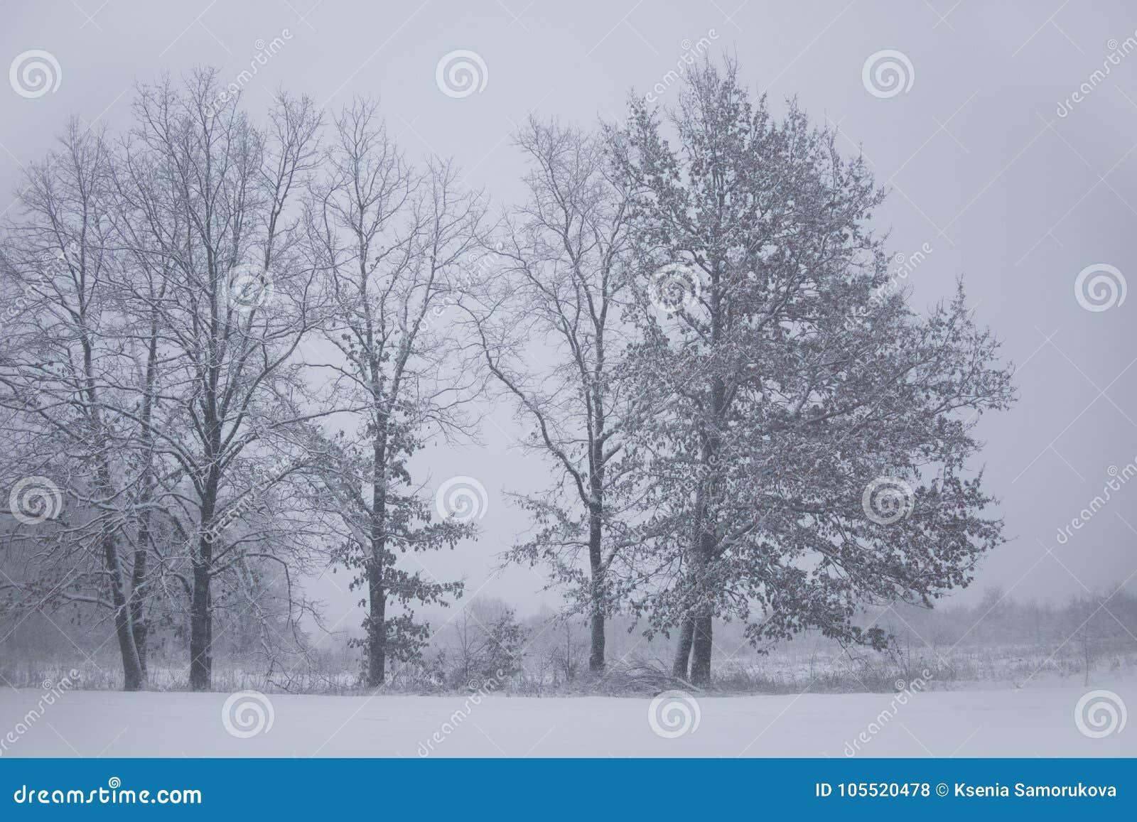 Horizontal de l hiver Arbres figés blizzard