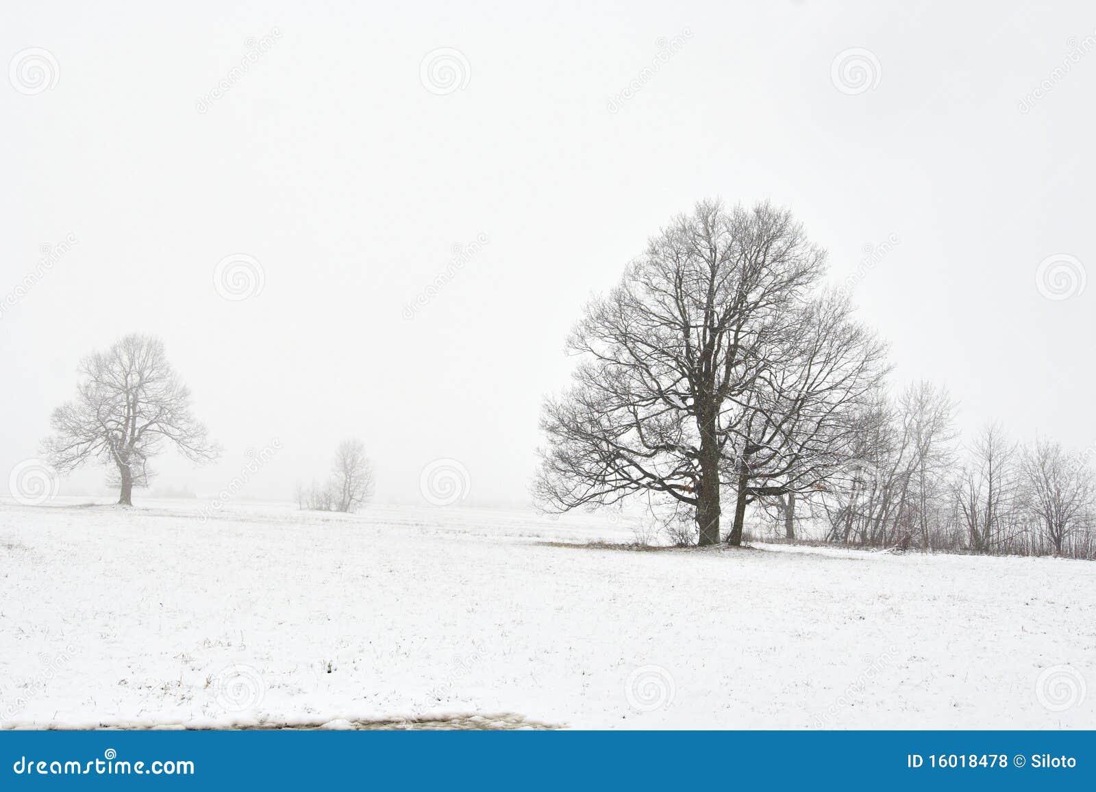 Horizontal de l hiver de Milou avec l arbre