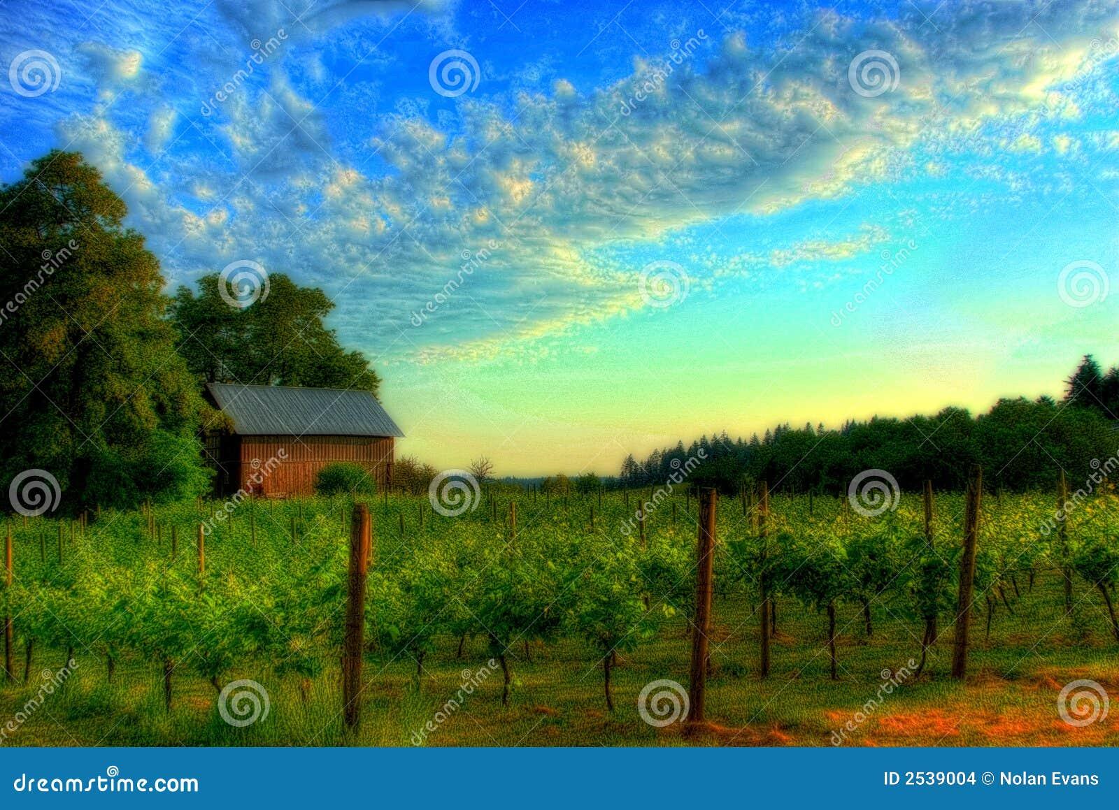 Horizontal de vigne