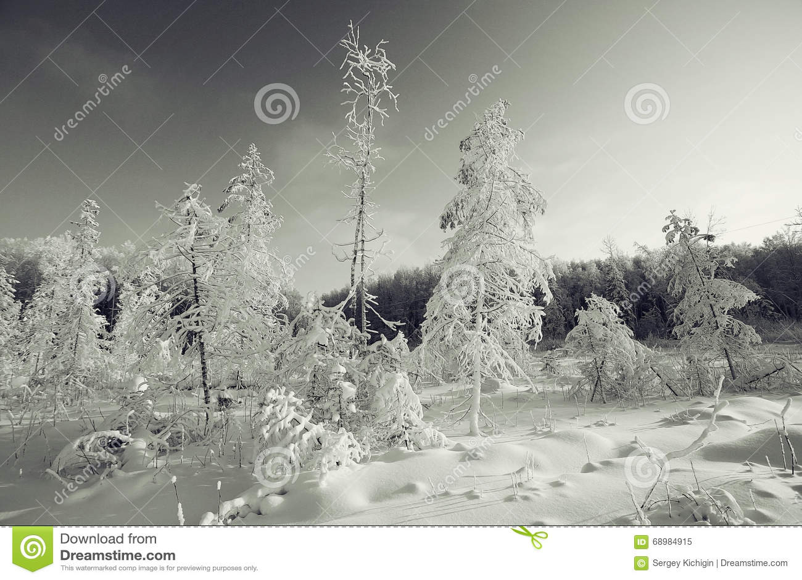 Horizontal monochrome de l hiver