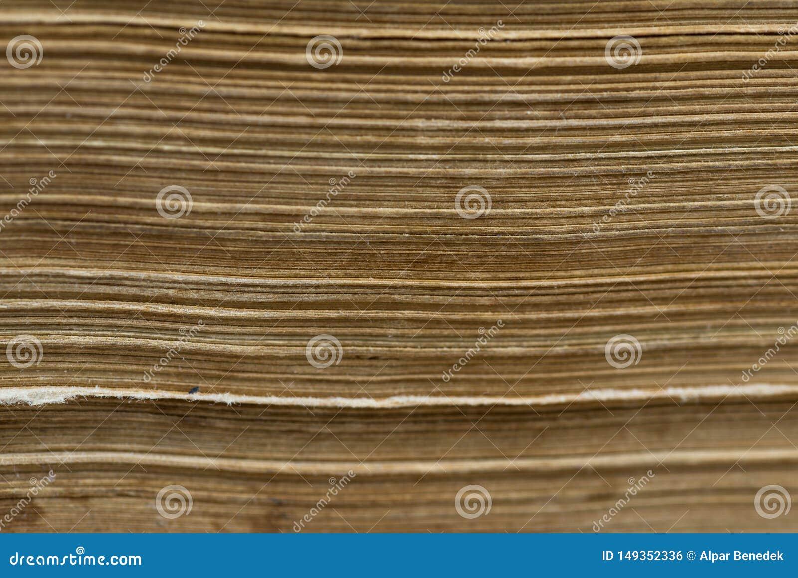 Horizontal old aged yellow book pages close up macro shot
