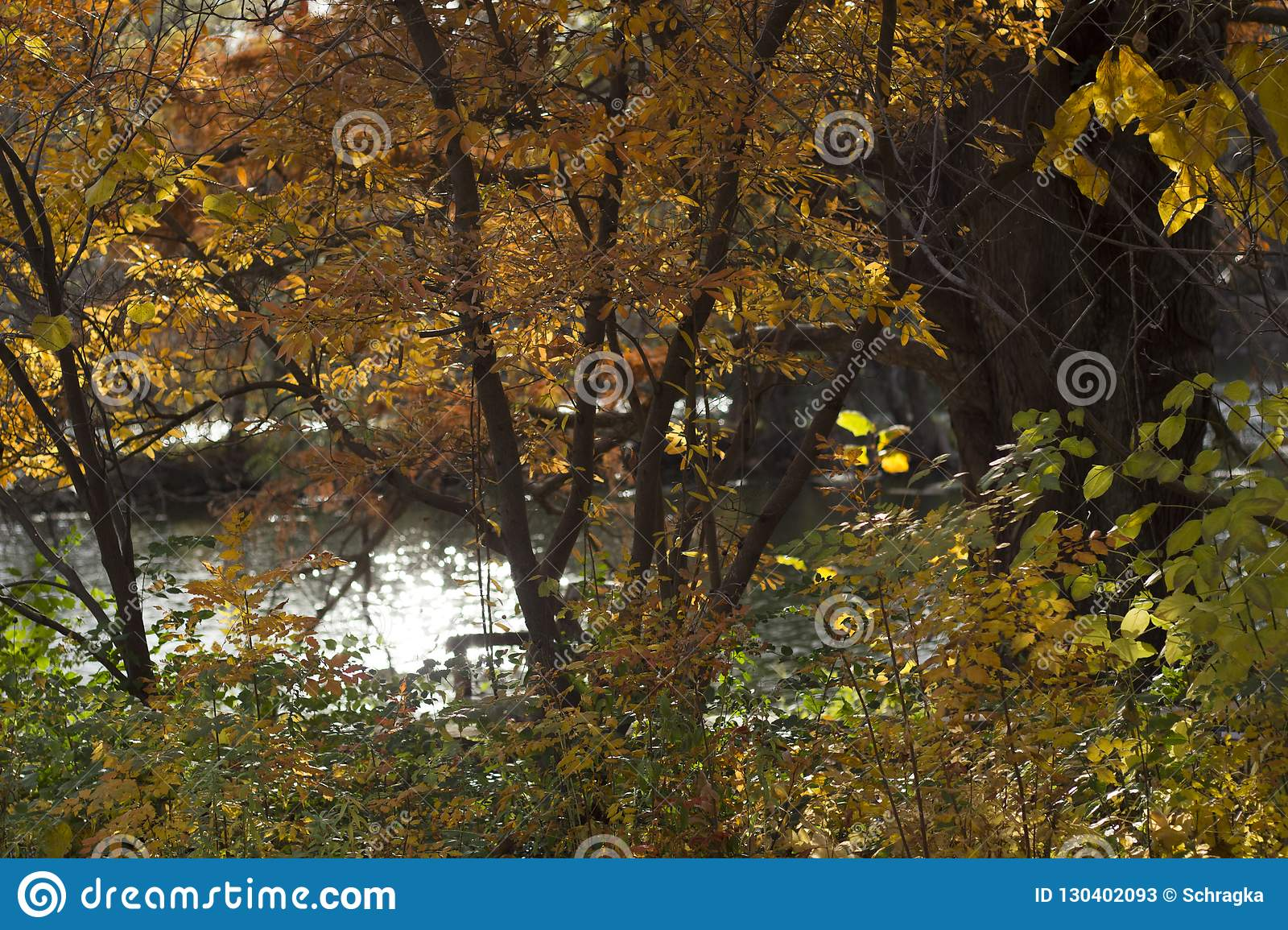 Horizontal photo of fall orange trees & bushes in front of water