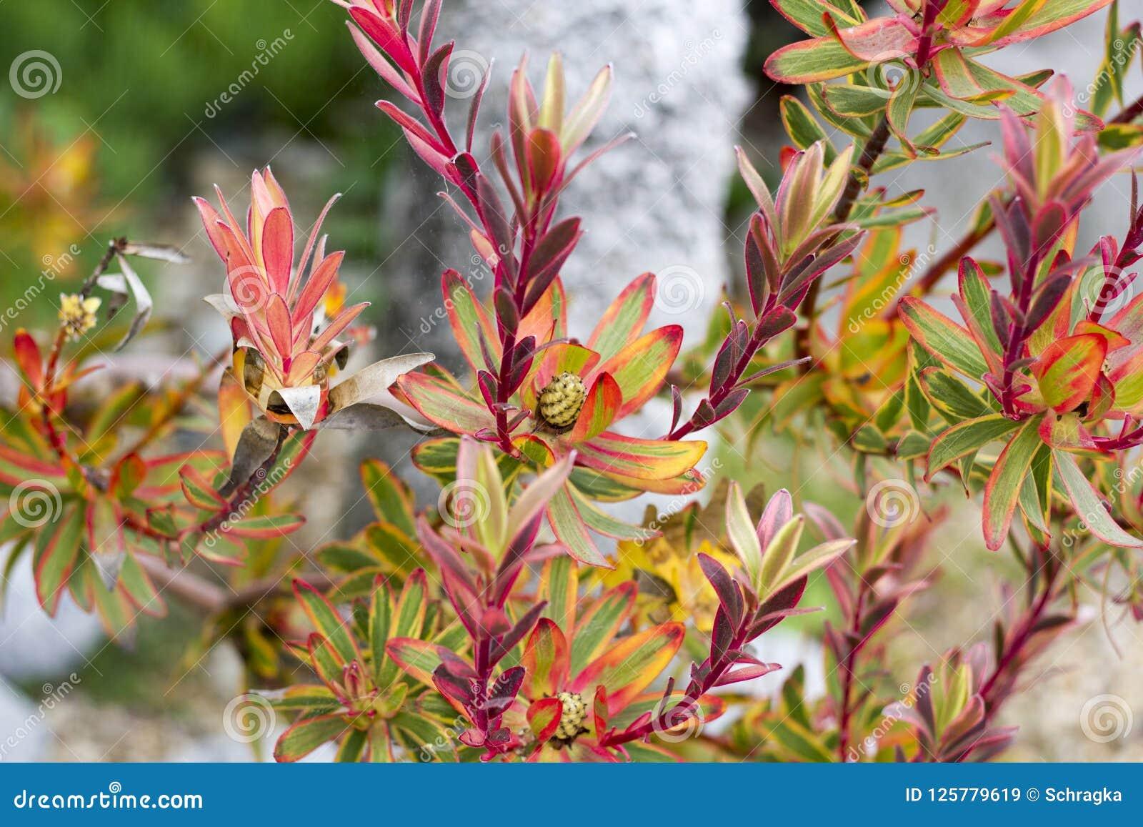 Horizontal photo of red & green leaf bush