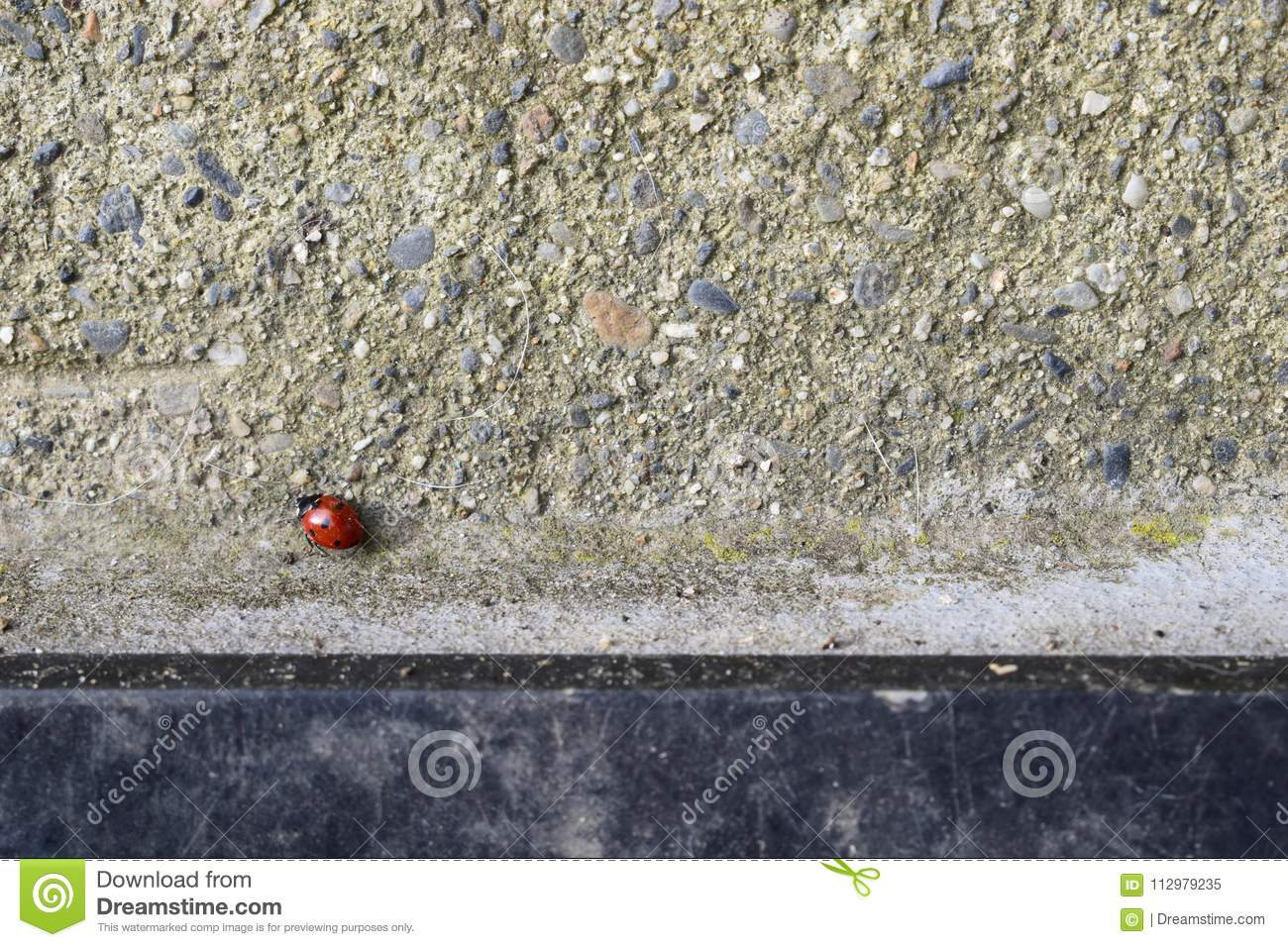 Red ladybug walking on grey cement