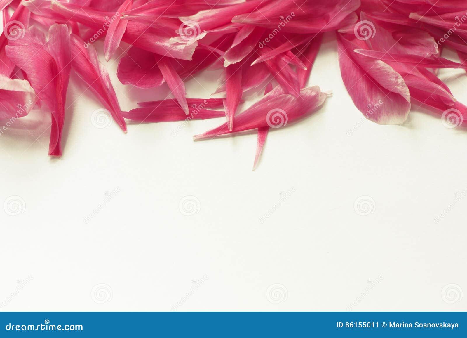 Horizontal pink peony border