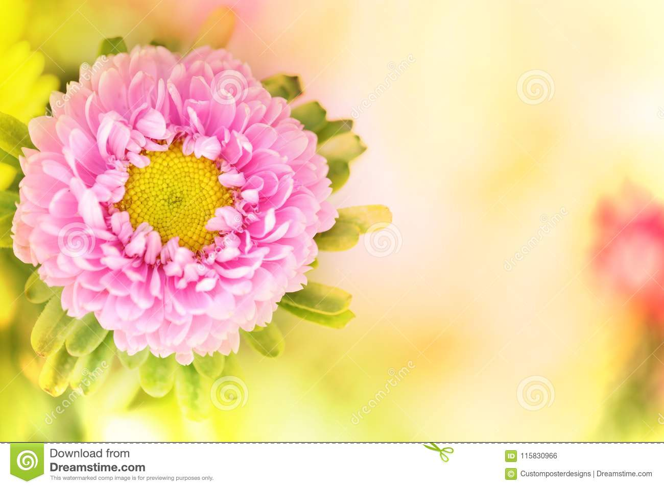 A horizontal presentation of a pink flower.