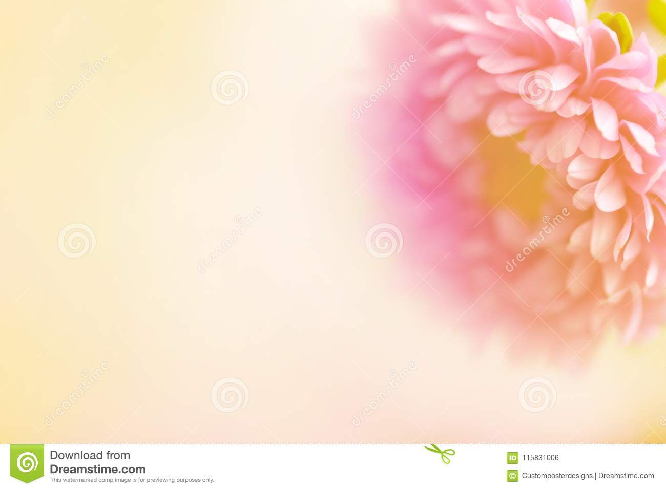 A beautiful soft flower with text area.