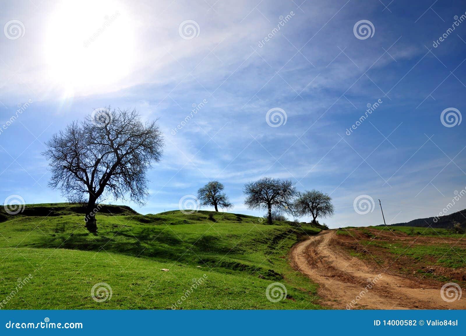 Horizontal rural, route et arbre