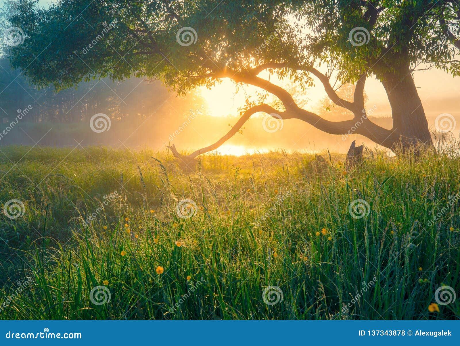 Horizontal vert de source Fond de source Nature de source