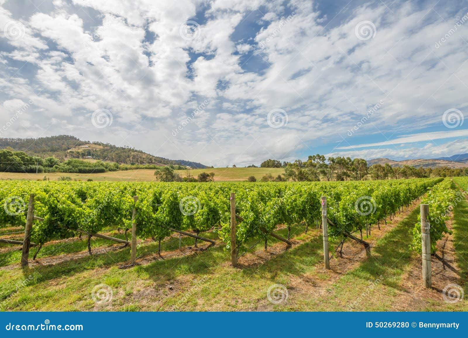 Horizontal vert de vigne