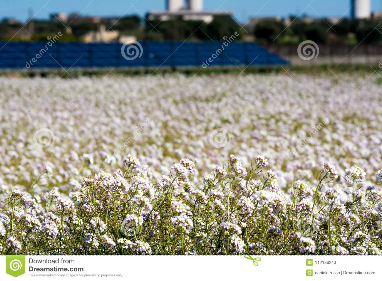 Horizontal View Of A Meadow With White Flowers On Blur Backgroun