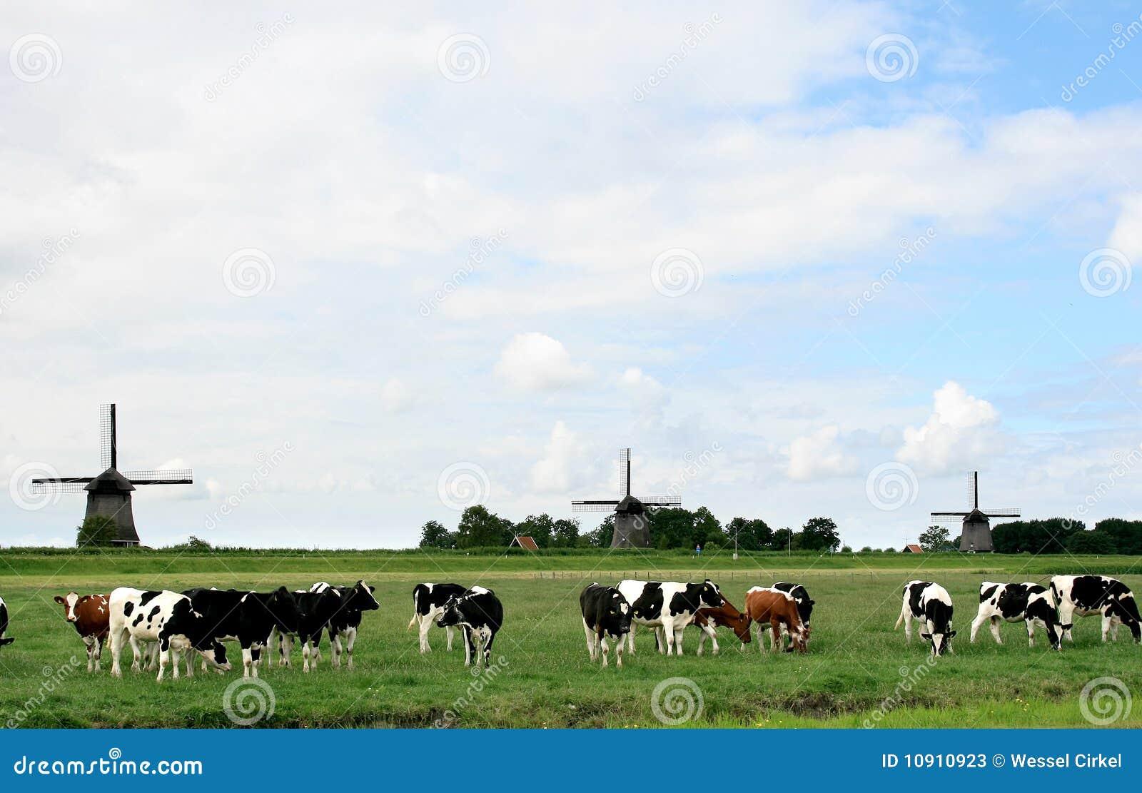 Horizontaux hollandais avec des vaches et des moulins