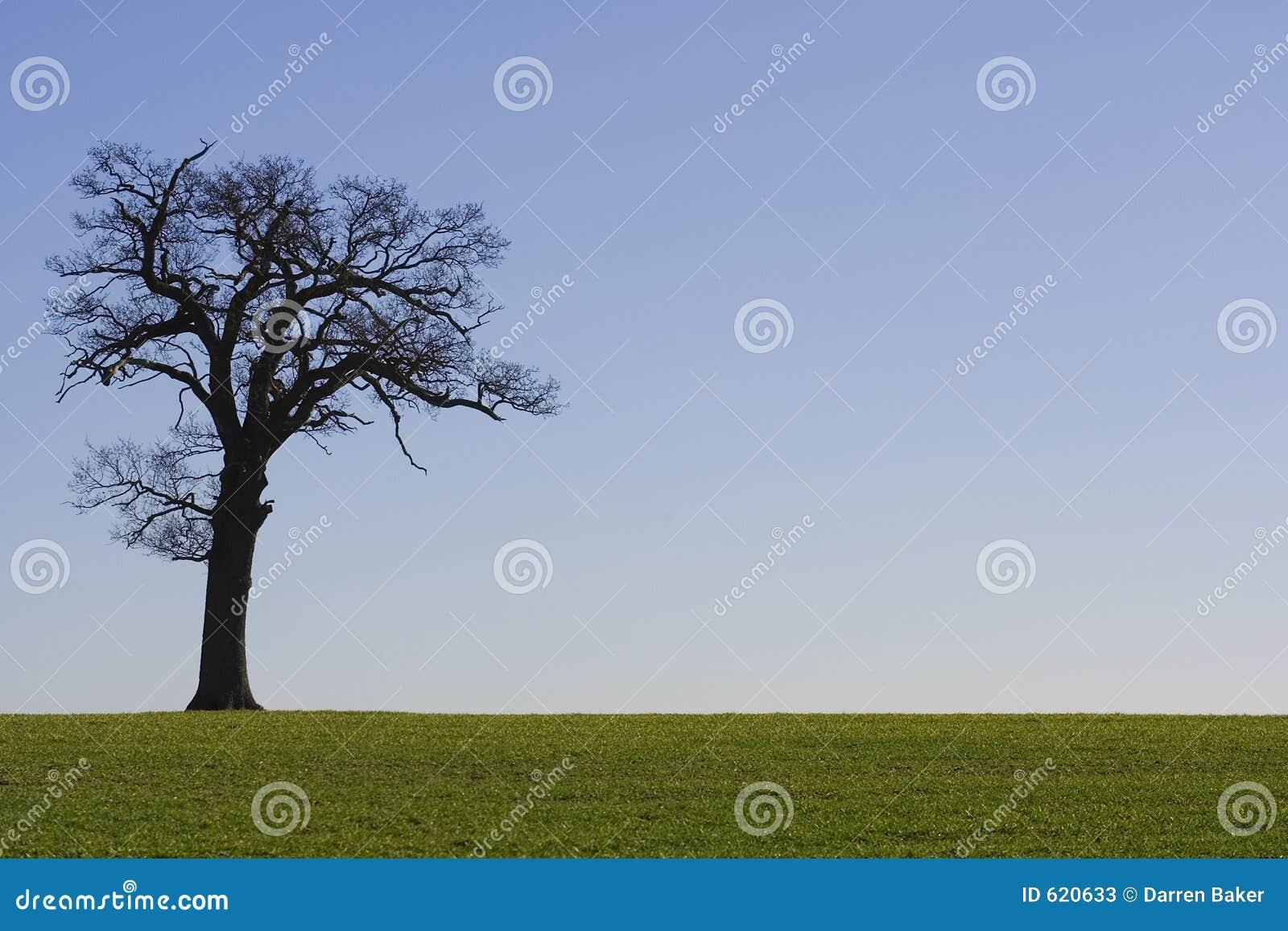 Horizonte 2 da árvore