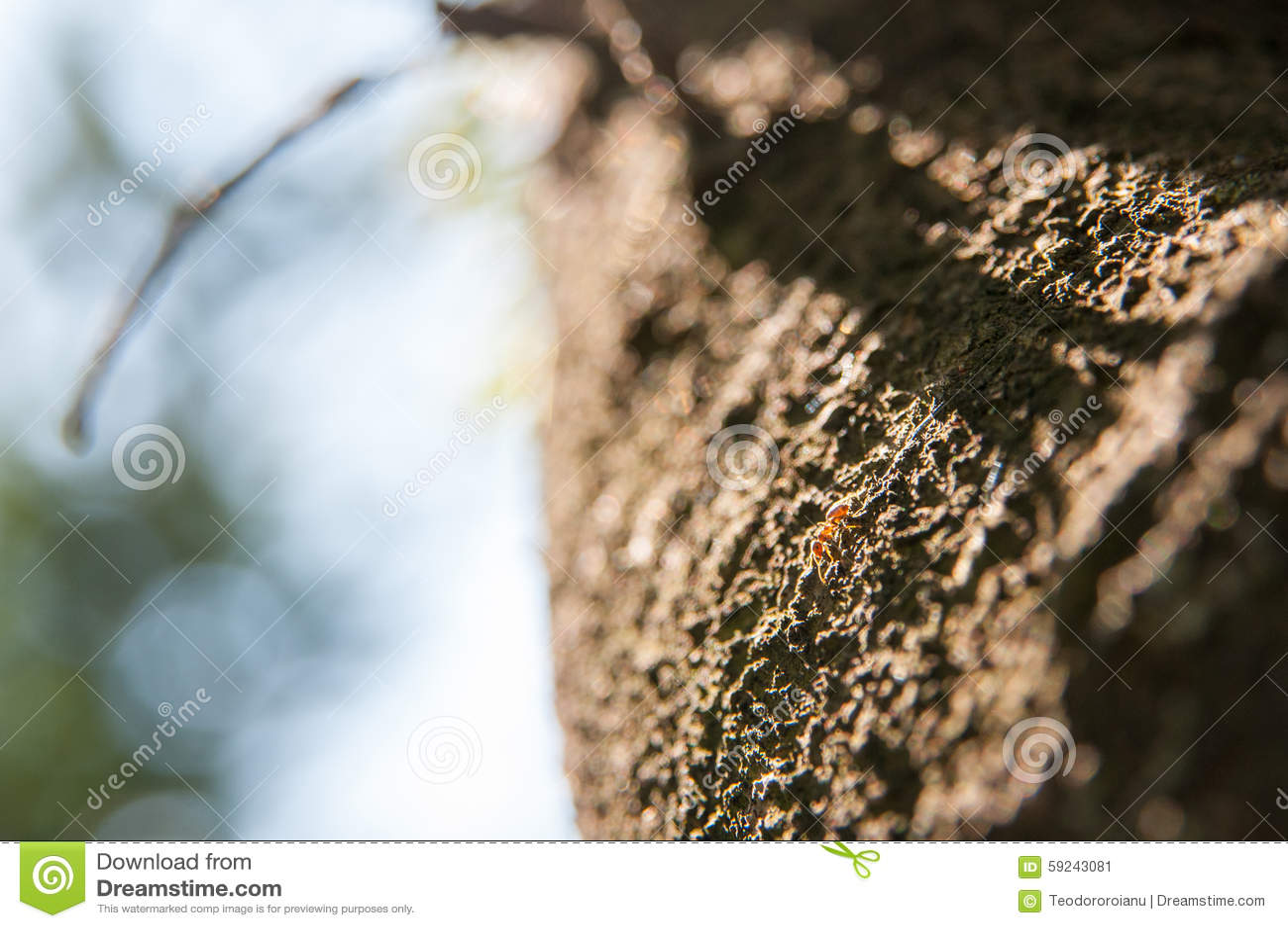 Download Hormiga en árbol imagen de archivo. Imagen de hormiga - 59243081