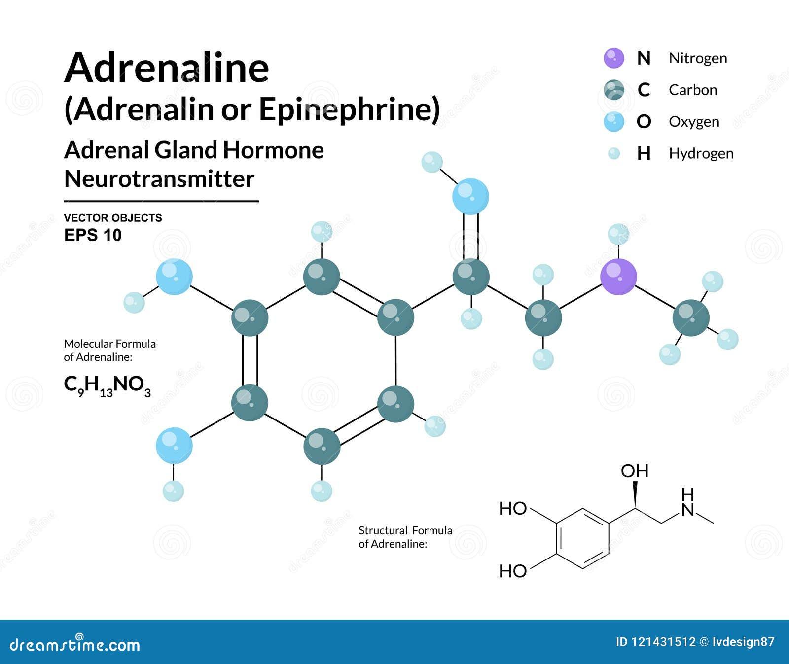 Hormona De La Adrenalina Epinephrine Neurotransmisor