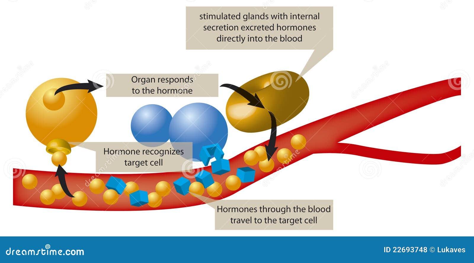 hormonen in bloed