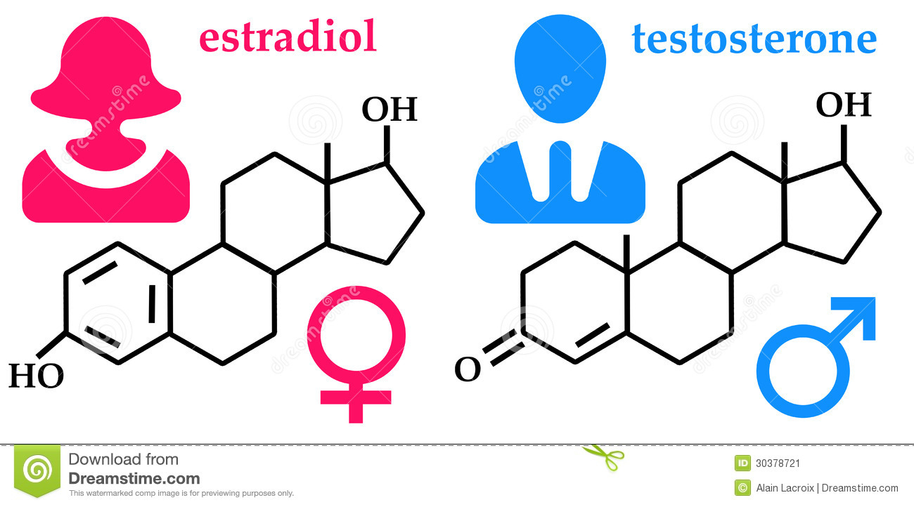 sex steroid hormones are secreted by the