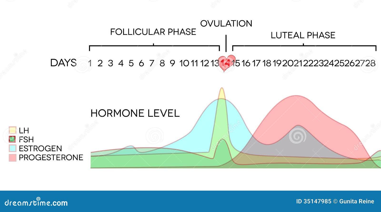 esteroidogenesis ovarica pdf