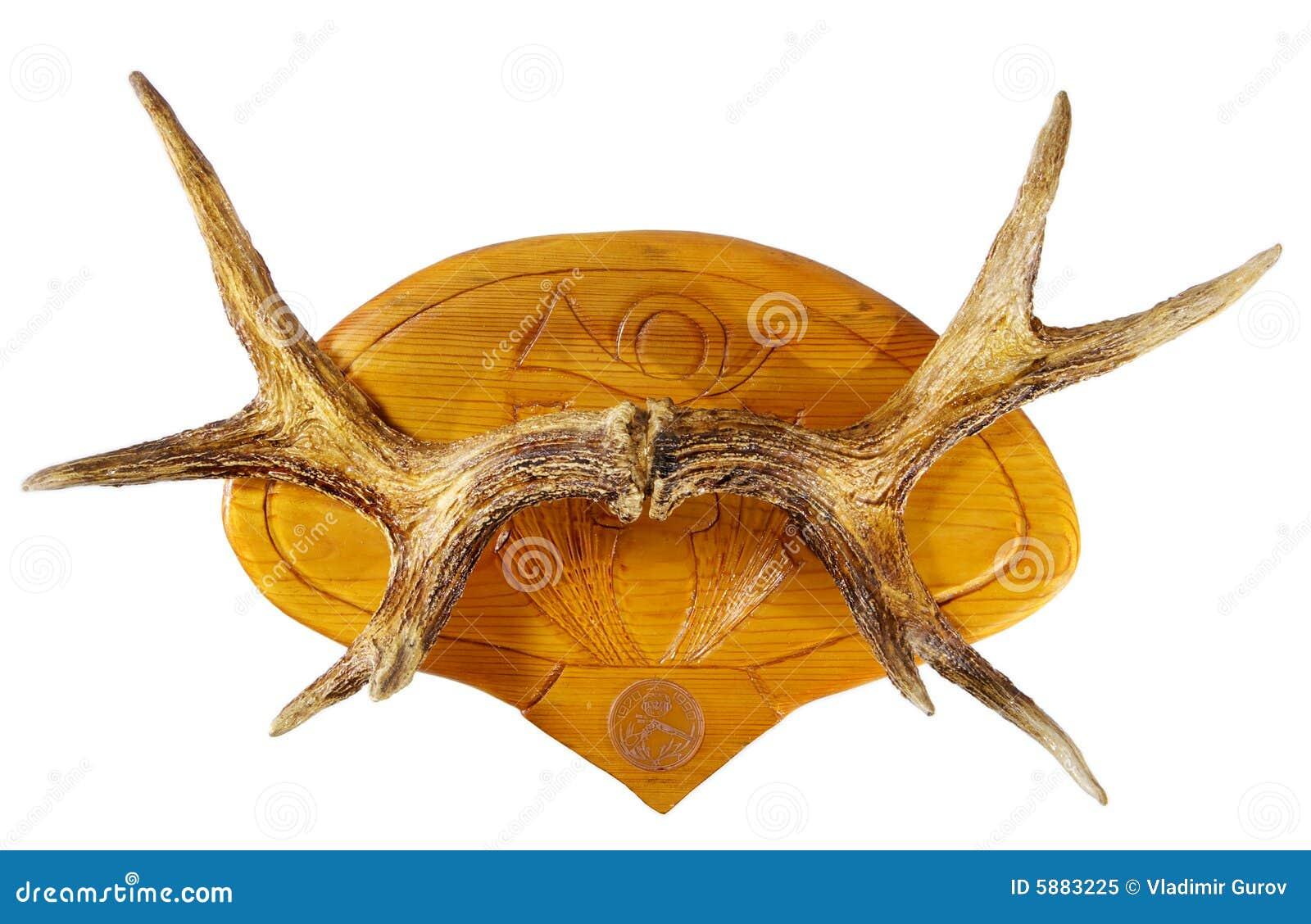 Horn łosia
