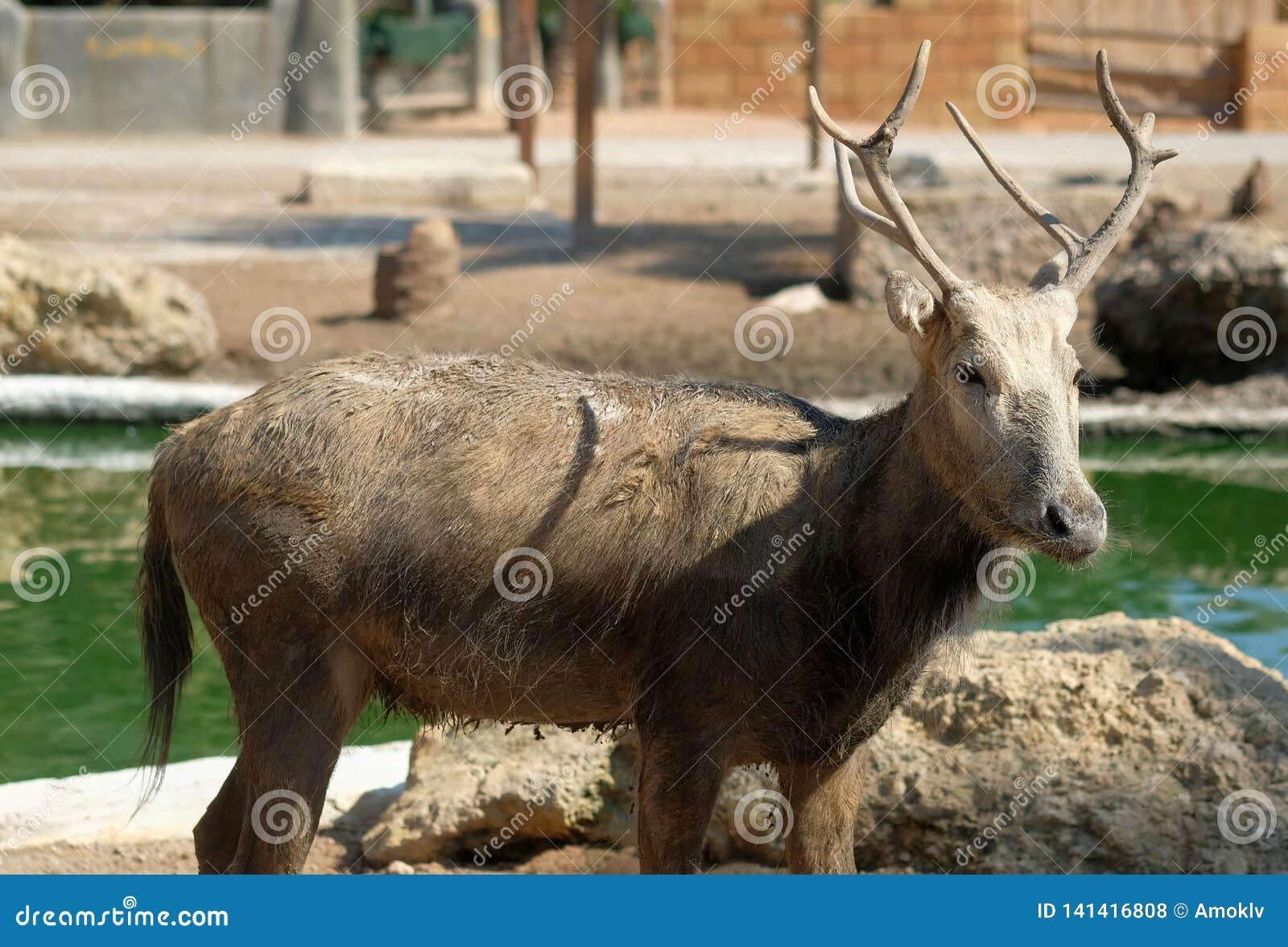 Horned deer standing outdoors