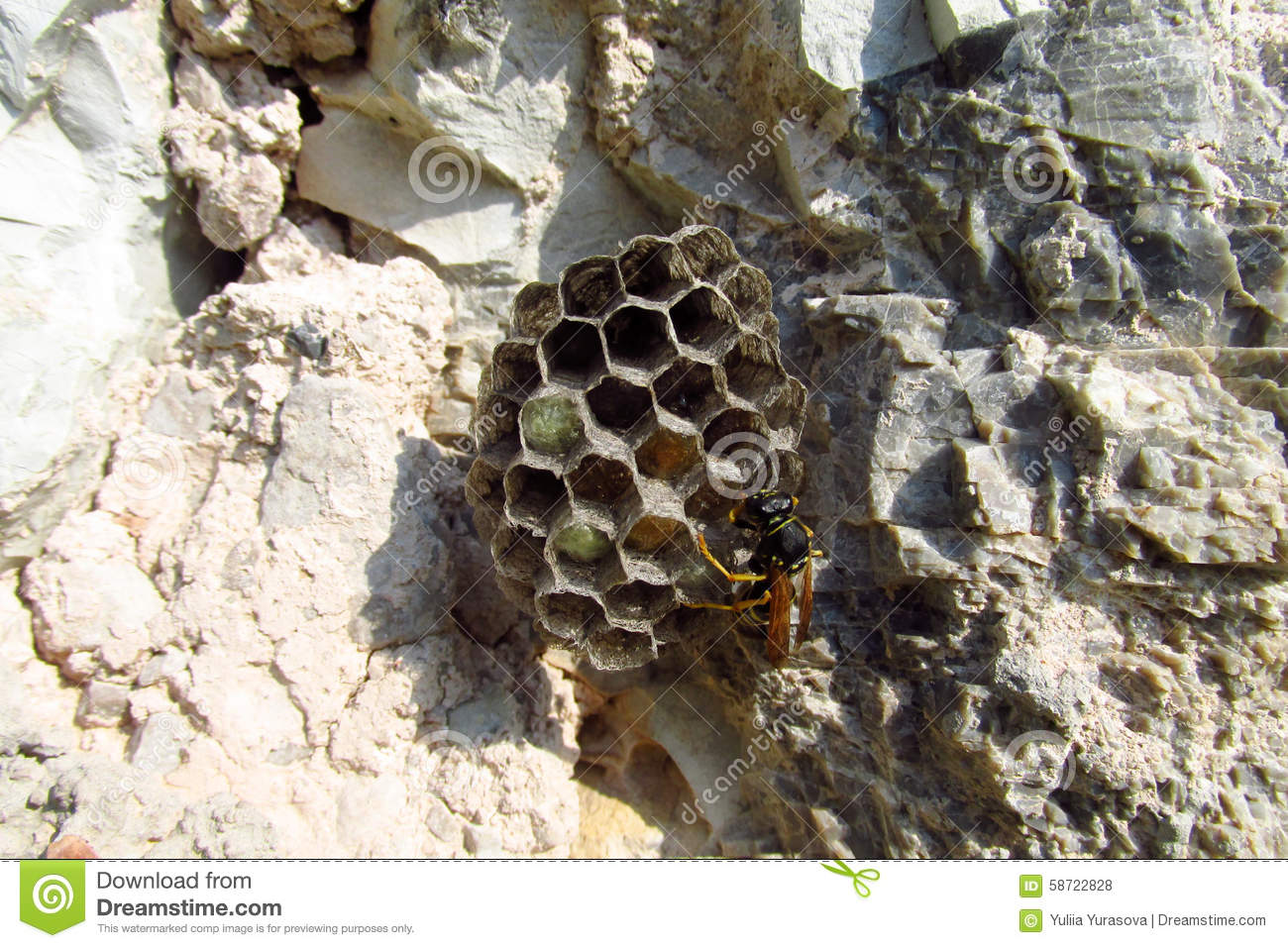 Hornet's Nest Stock Photo - Image: 58722828