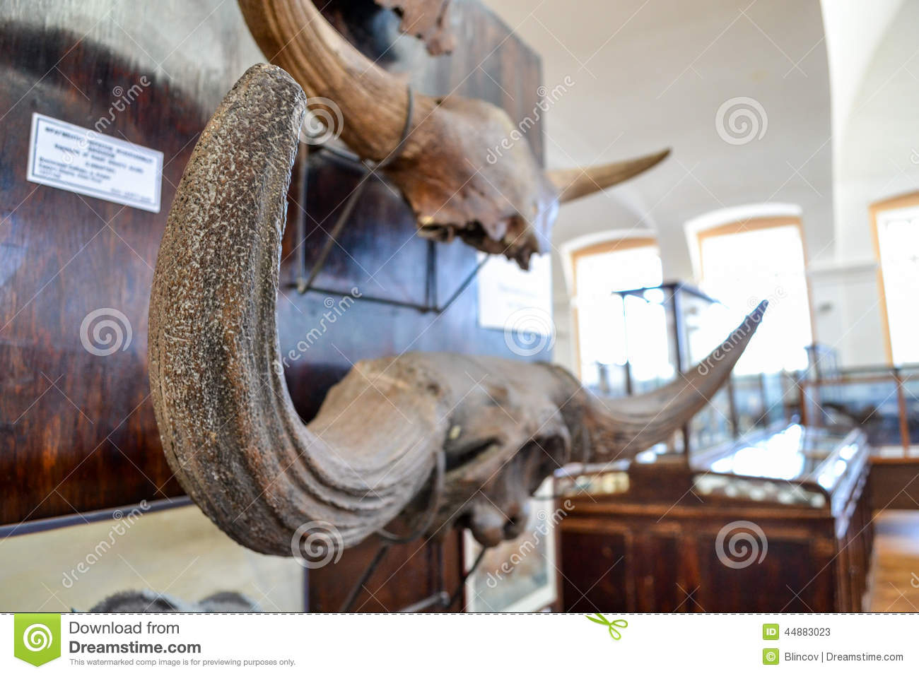 The horns on the wall