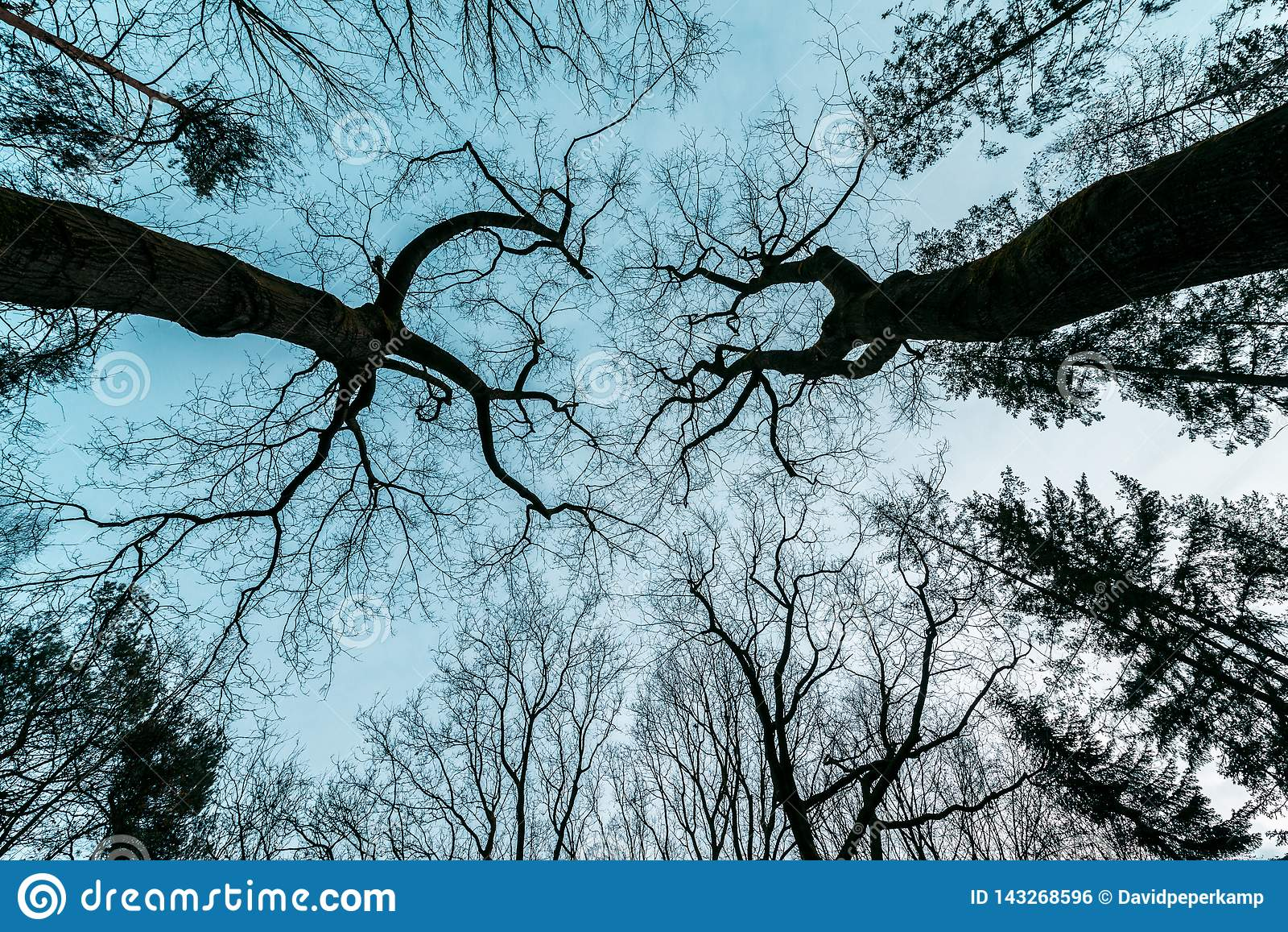 Horror, misterioso, árvore do filme policial