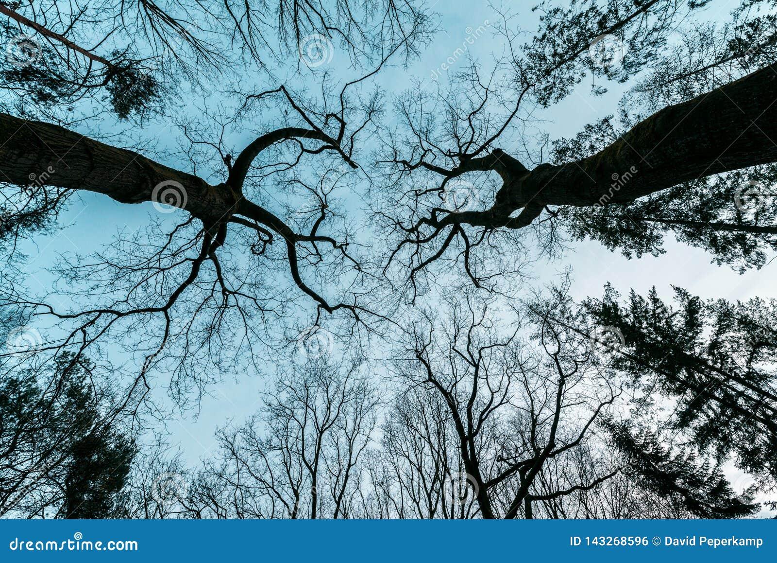Horror, tajemniczy, dreszczowa drzewo